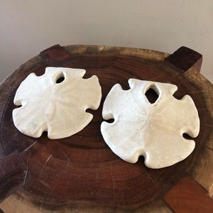 Set of 100% Real Sand Dollars
